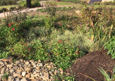 Farmhouse Raingarden